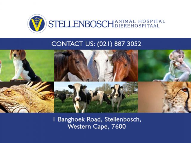 Stellenbosch Animal Hospital